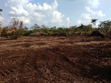 Cleared The Land, Landscape