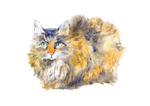 Ginger Kitty.Watercolor Hand Drawn Illustration.Postcard With Cat On A White Background.