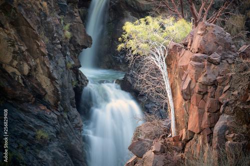 Foto op Plexiglas Cappuccino Lone tree at Epupa Falls, Namibia.