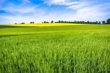 Agricultural Field, Green Spri...