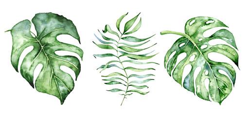 Fototapeta Do sypialni Watercolor monstera leaves set. Tropical plant illustration