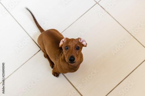 Foto  Cão