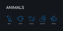 5 Outline Stroke Blue Piranha,...
