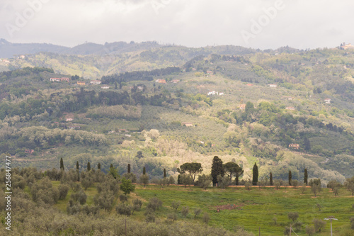 Fotografie, Obraz  Typical Tuscany landscape with hills and green trees, Italy.