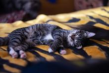 Little Gray Kitten Sleeping On...