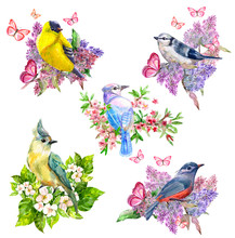 Happy Collection Of Pretty Cute Birds In Spring Flowers. Watercolor Painting
