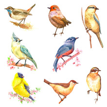 Collection Of Pretty Cute Bird...