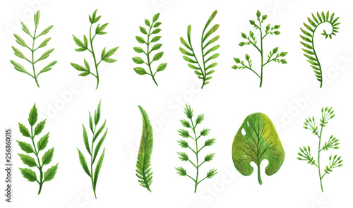 Fotografie, Obraz  Vector designer elements set collection of green greenery art foliage natural leaves herbs in watercolor style