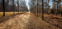 Seemingly Endless Path In A Du...