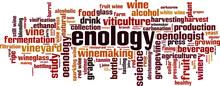 Enology Word Cloud