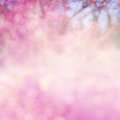 canvas print picture - blur pink flowers background