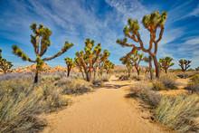 Hiking Trails Through Joshua T...