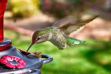 Hummingbird Gallery