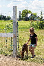 Young Girl In Shorts Petting A...