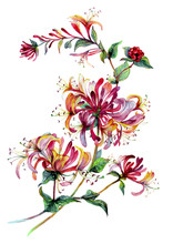 Watercolor Honeysuckle Composition