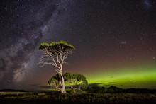 Aurora Australis Or Southern Lights And Milky Way Behind Gum Trees