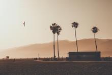 California Dreaming In Santa M...