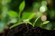 Selective focus on Little seedling in black soil