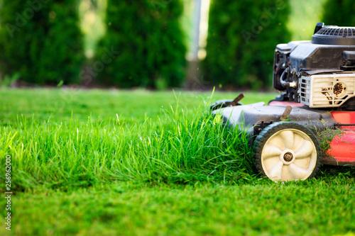 Obraz Lawn mower cutting green grass - fototapety do salonu
