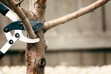Pruning Tree Branches Early In Spring