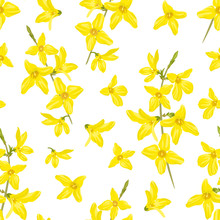 Forsythia Seamless Pattern On ...