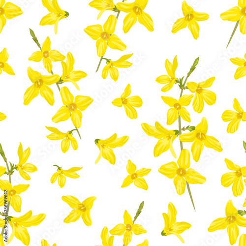 Forsythia seamless pattern on white background Canvas Print