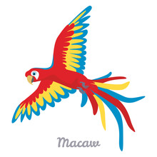 Macaw Parrot Flying Isolated On White Background. Vector Illustration Colorful Bird In Cartoon Simple Flat Style.