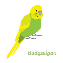 Budgerigar Parrot In Cartoon S...