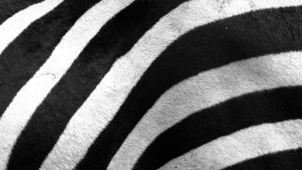 FototapetaClose up of zebra stripes