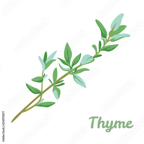 Valokuvatapetti Thyme