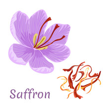 Saffron Flower Isolated On Whi...