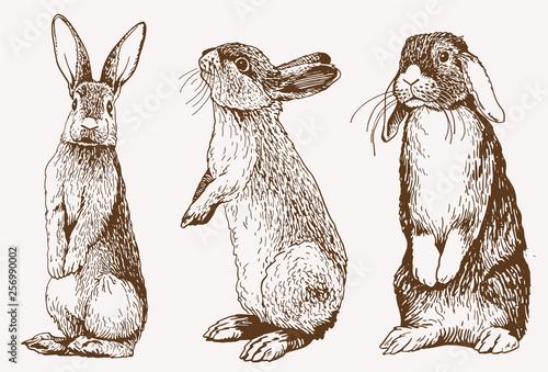Fotomural Graphical vintage set of bunnies ,vector retro illustration.