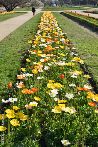 Allée fleurie au jardin au printemps - Buy this stock photo and ...