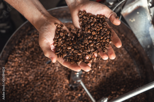 Slika na platnu Grains of fresh coffee roasting in hands on the background of the roaster