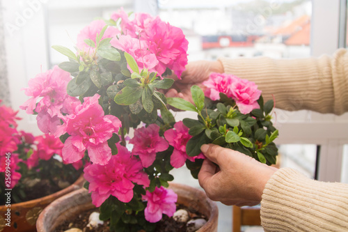 Gardeners hands arranging flowers on the terrace, close-up photo