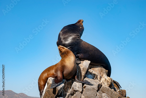 Sea lions basking in the sun at Lands End in the resort of Cabo San Lucas at the Wallpaper Mural