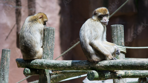 Photo monkies sitting
