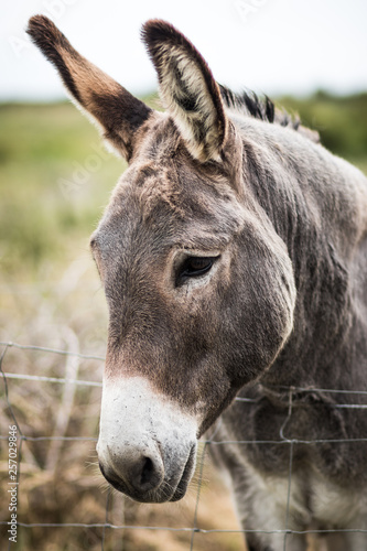 portrait of a donkey Canvas-taulu