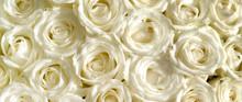Weiße Rosen Banner