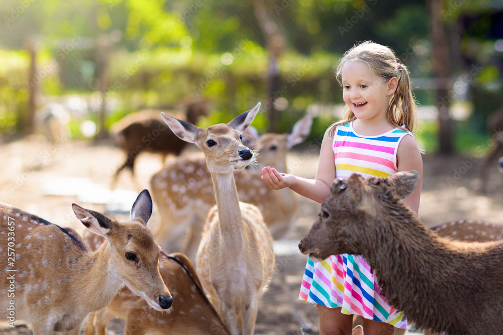 Fototapeta Child feeding wild deer at zoo. Kids feed animals.