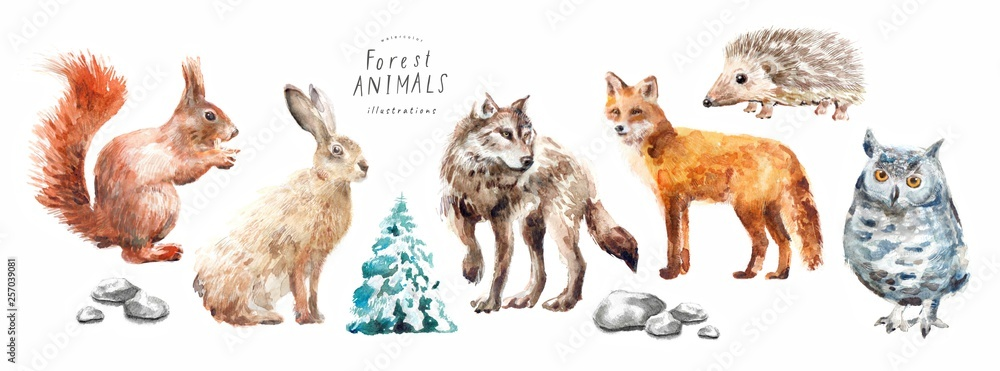 Fototapety, obrazy: Watercolor illustrations of forest animals: hare, wolf, fox, hedgehog, owl, squirrel, spruce, isolated freehand drawings