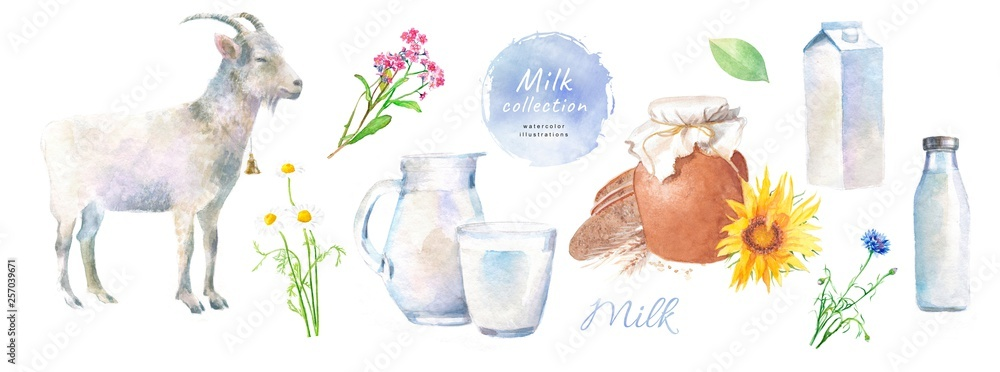Fototapety, obrazy: Watercolor illustrations of goat milk and dairy, village products: goat, milk, jug, bottle, pet, glass, chamomile, cornflower, wild flowers
