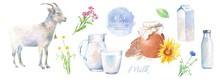 Watercolor Illustrations Of Goat Milk And Dairy, Village Products: Goat, Milk, Jug, Bottle, Pet, Glass, Chamomile, Cornflower, Wild Flowers