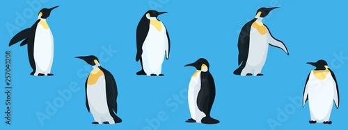 Obraz na plátně flat penguins on a blue background collection