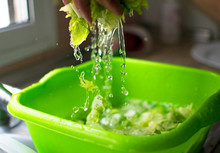 Hands Washing Salad Lettuces. ...