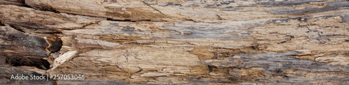 Fotografie, Obraz Tree trunk stripped of bark background or texture