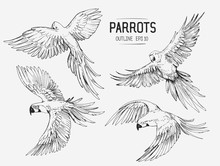 Parrot Sketches. Hand Drawn Outlines Converted To Vector