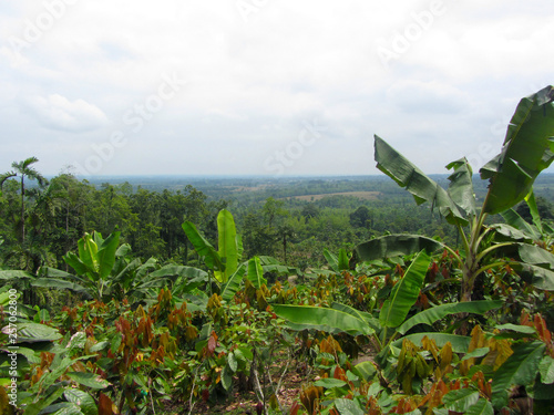 Cuadros en Lienzo banana and cocoa bean plantations in the foothills of the Andes