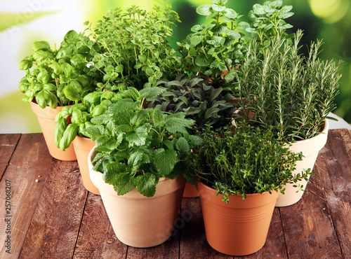Homegrown and aromatic herbs in old clay pots on rustic background Tapéta, Fotótapéta
