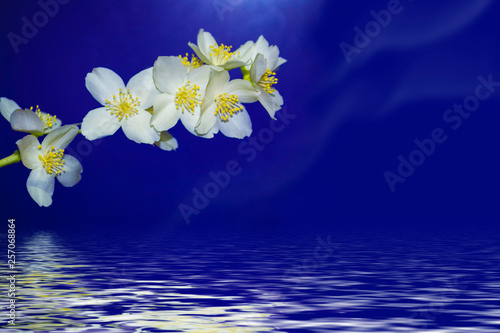 Photo  White jasmine The branch delicate spring flowers